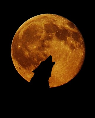 super blood moon january 2019 utah - photo #14